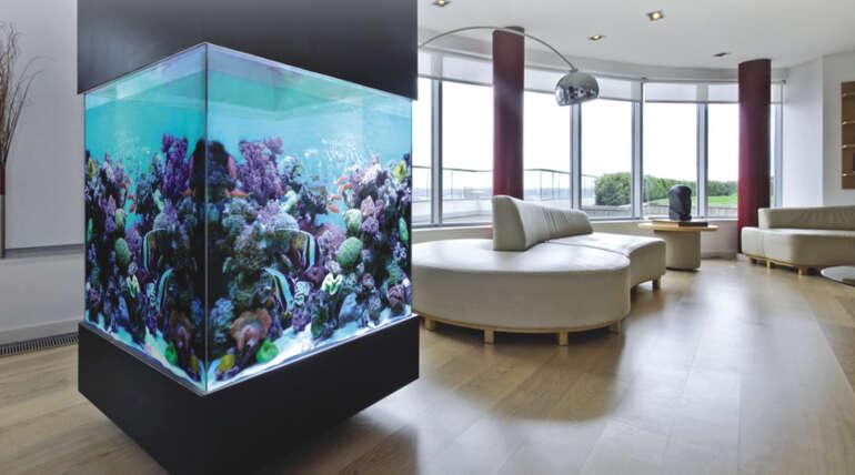 Different Aquariums For Different Ideas